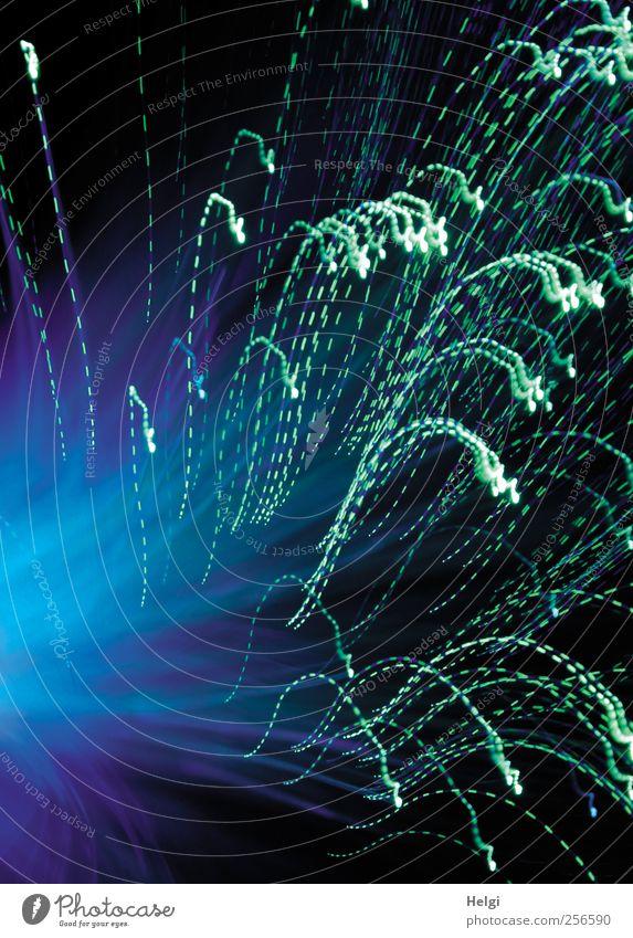 auf und ab.... blau grün schön Freude Bewegung Lampe hell Linie Kunst ästhetisch Geschwindigkeit außergewöhnlich leuchten einzigartig einfach Kitsch