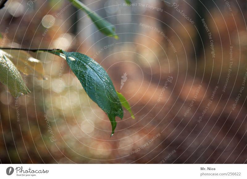 l'automne Umwelt Natur Wassertropfen Sommer Herbst Pflanze Sträucher Blatt Wald grün Grünpflanze Wachstum Vergänglichkeit herbstlich Waldlichtung Tau taufrisch