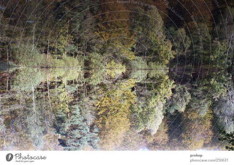 Herbst I Umwelt Natur Landschaft Pflanze Wasser Klima Wetter Schönes Wetter Baum Wald Seeufer natürlich Romantik bizarr Einsamkeit Erholung Farbe Frieden