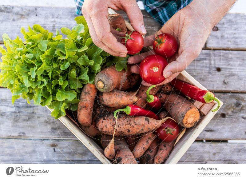 Frisches Gemüse Lebensmittel Salat Salatbeilage Bioprodukte Vegetarische Ernährung Gesunde Ernährung Gartenarbeit Landwirtschaft Forstwirtschaft Mann Erwachsene