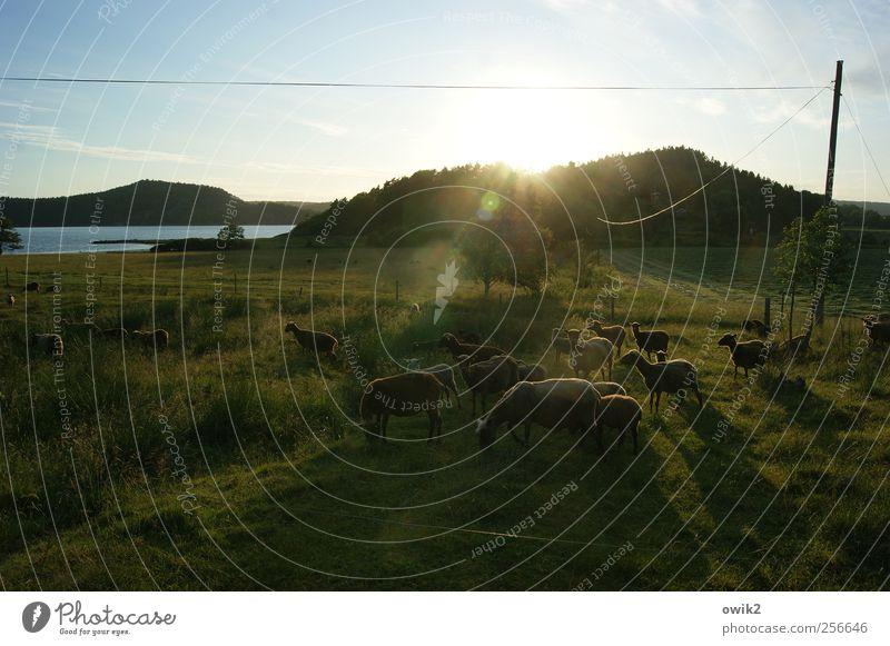 Shauns Fanclub Energiewirtschaft Umwelt Natur Landschaft Pflanze Tier Himmel Wolken Horizont Sonne Sommer Klima Schönes Wetter Wärme Baum Gras Sträucher Wiese
