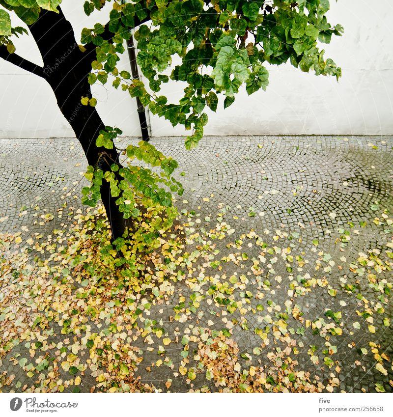 vienna Ferien & Urlaub & Reisen Tourismus Ausflug Abenteuer Sightseeing Städtereise Natur Herbst Pflanze Baum Grünpflanze Park Stadt Stadtzentrum Haus Mauer