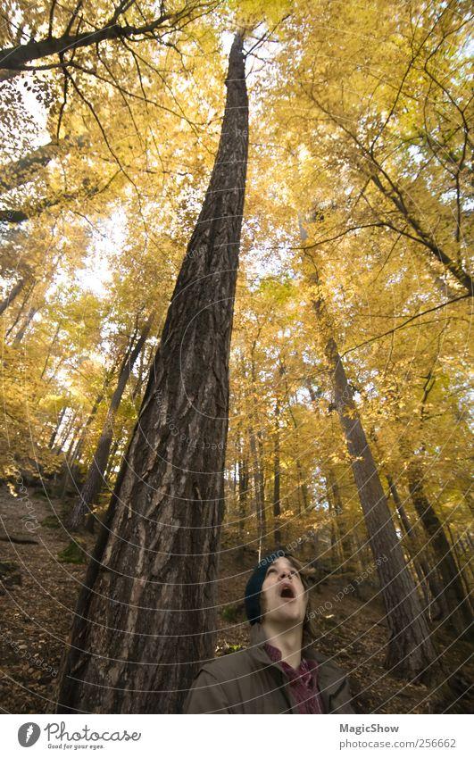 Looking up the highest tree. Mensch Natur Jugendliche Baum Erwachsene Gesicht Wald gelb Herbst Wärme Ausflug maskulin ästhetisch 18-30 Jahre Surrealismus Höhe