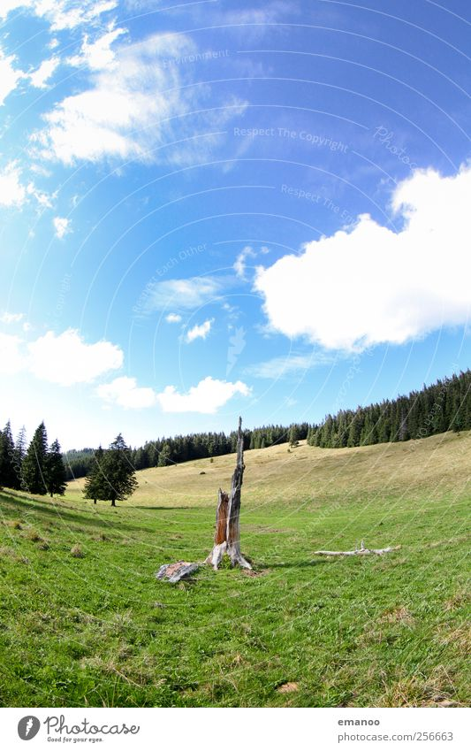 Hüttenwasen Himmel Natur alt blau grün Baum Pflanze Ferien & Urlaub & Reisen Sommer Wald Wiese Umwelt Landschaft Berge u. Gebirge Gras Luft