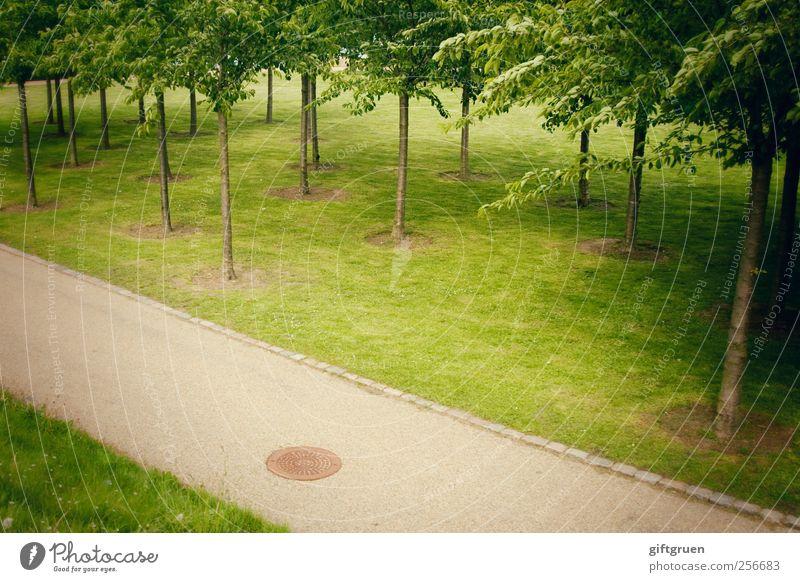 randgruppe Pflanze Baum Gras Grünpflanze Park Wiese gehen Wachstum mehrere Kulturlandschaft Fußweg Wege & Pfade Asphalt Blatt gepflegt Baumstamm Randgruppe