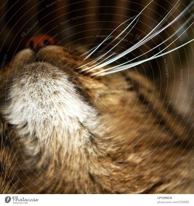 Kitty Kat Katze Tier schlafen niedlich Fell Haustier Aktion Schnurrhaar