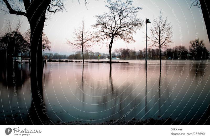 Hochwasser am Main Umwelt Landschaft Wasser Himmel Sonnenaufgang Sonnenuntergang Baum Küste Flussufer Frankfurt am Main kalt Natur Surrealismus