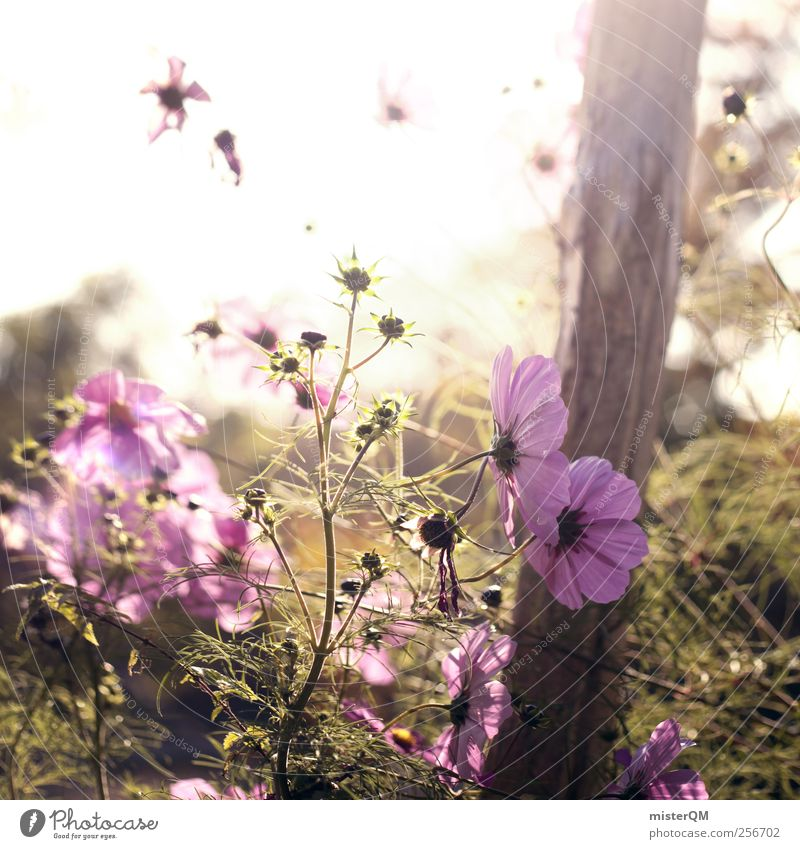A Good Day. Umwelt Natur Landschaft Pflanze ästhetisch Zufriedenheit Idylle ruhig ruhen abgelegen violett Garten Blume Blumenwiese Blumenkasten Wiese