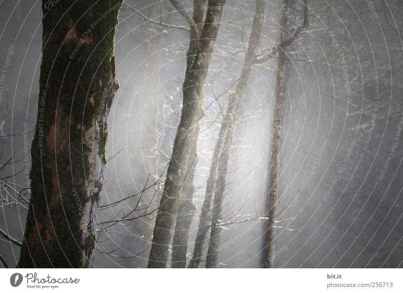 Dunkelwald Natur Wasser Baum Pflanze Winter schwarz Einsamkeit Wald Herbst dunkel kalt Umwelt grau Regen Wetter Angst