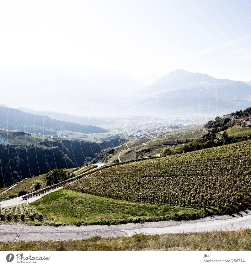 Wein im Frühstadium Natur Sommer Herbst Straße Berge u. Gebirge Ausflug Schönes Wetter Verkehrswege Duft genießen Tal Dunst steil Sinnesorgane Grünpflanze