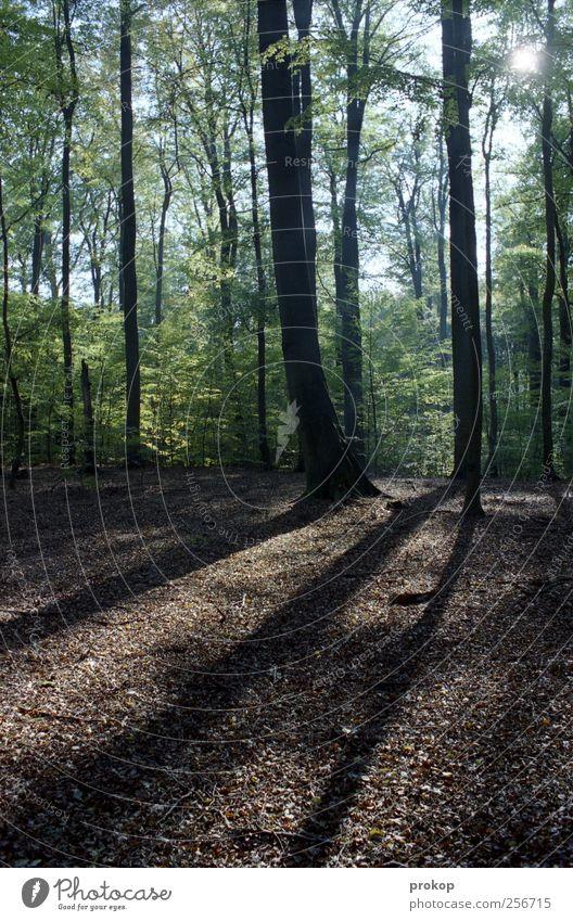 Herbst II Umwelt Natur Landschaft Pflanze Himmel Klima Wetter Schönes Wetter Baum Wald authentisch Duft einfach natürlich wild Vorsicht Zufriedenheit Einsamkeit
