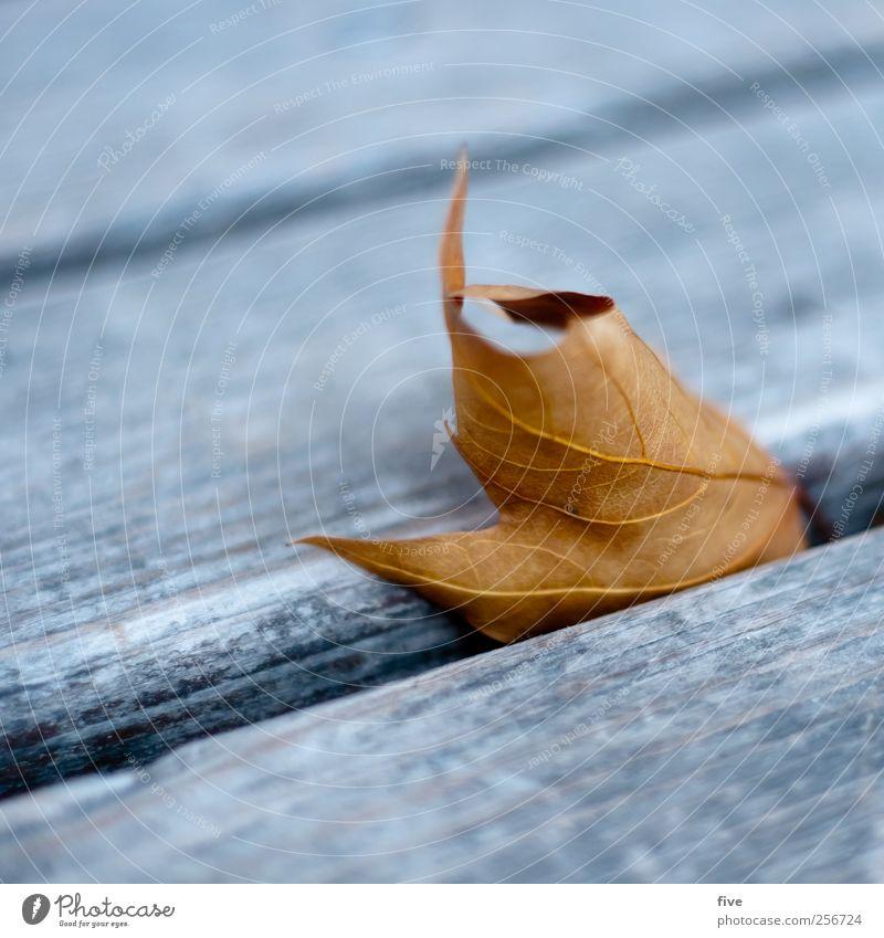 vienna Natur Herbst nah Wien Blatt Bank Parkbank Holz Detailaufnahme Linie Farbfoto Außenaufnahme Nahaufnahme Tag Unschärfe Schwache Tiefenschärfe