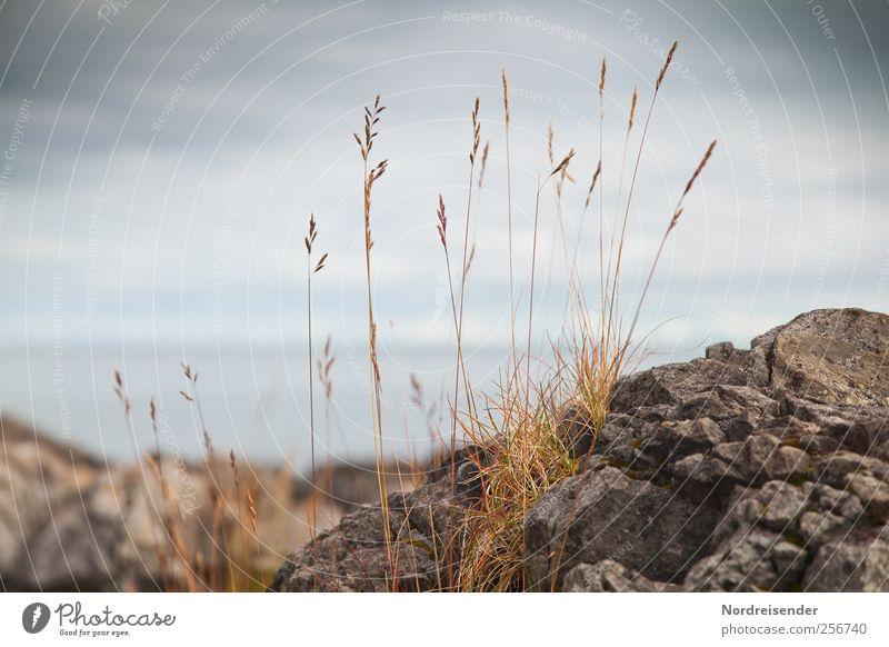 Gras Himmel Natur Wasser Pflanze Meer Wolken Einsamkeit Küste Stein Felsen natürlich ästhetisch Klima Wachstum Wandel & Veränderung