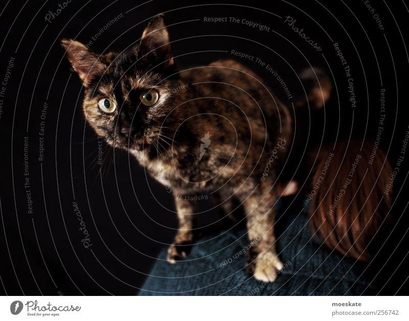 Was guckst du? Mensch Frau Erwachsene 1 Haustier Katze Tier ästhetisch trendy Neugier schön verrückt braun schwarz Abenteuer Stil Auge Gedeckte Farben