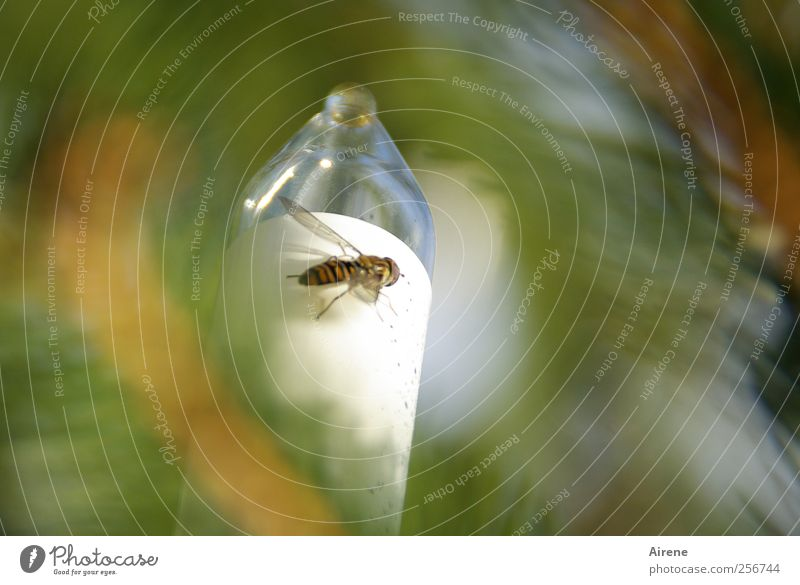 weihnachtliches Flügelwesen Pflanze Weihnachten & Advent weiß Baum Tier Feste & Feiern fliegen Lampe Dekoration & Verzierung Fliege Schönes Wetter Kerze Insekt
