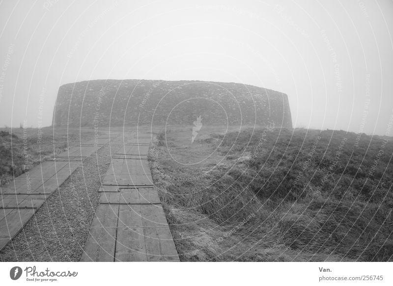 Grianán of Aileach Umwelt Himmel Herbst schlechtes Wetter Nebel Pflanze Gras Wiese Republik Irland Ruine Bauwerk Festung Mauer Wand Sehenswürdigkeit