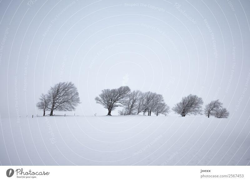 Vom Wind geformte kahle Bäume in diesiger Winterlandschaft weiß grau Gedeckte Farben Landschaft Baum Menschenleer Wintertag Winterstimmung Nebel
