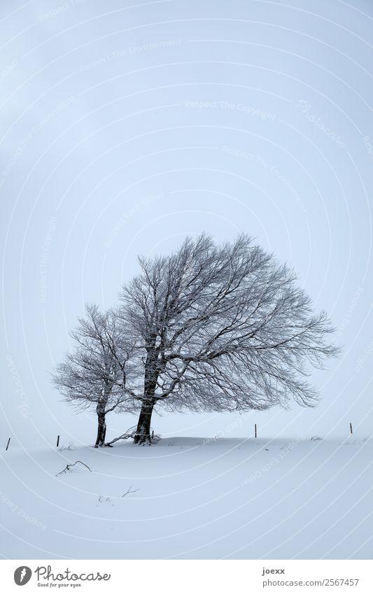 Gemeinsam blau Landschaft weiß Baum ruhig dunkel schwarz kalt Schnee Eis trist Frost geduldig Windflüchter