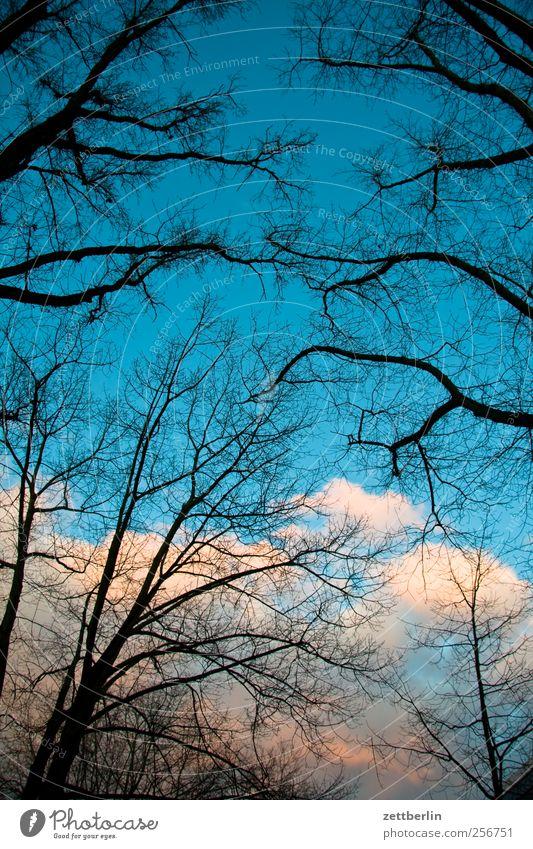 Wetter schön Umwelt Natur Landschaft Himmel Wolken Herbst Winter Klima Klimawandel Schönes Wetter Baum Garten Park gut am Ast Laubbaum spaziergang wallroth