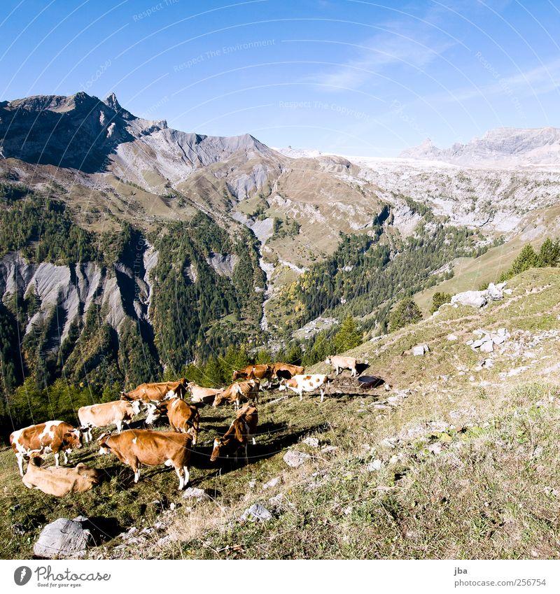 Gruppentreffen Himmel Natur Sommer Tier ruhig Wald Herbst Berge u. Gebirge Gras Stein Zusammensein Zufriedenheit wandern liegen Ausflug stehen