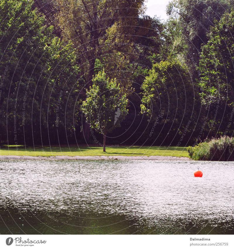 Will wieder Sommer Angeln Ferien & Urlaub & Reisen Sommerurlaub Umwelt Natur Landschaft Wasser Frühling Klima Schönes Wetter Wiese Feld Wald Seeufer Teich