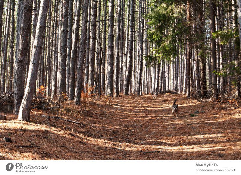 Natur Pflanze Tier Wald Herbst Hund Freiheit Bewegung Park Energie Abenteuer Macht Tiergesicht Schönes Wetter chaotisch Haustier