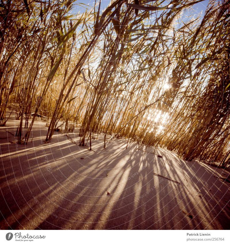 You are my sunshine Natur Wasser Pflanze Sonne Ferien & Urlaub & Reisen Sommer Strand ruhig Ferne Erholung Umwelt Landschaft Gras Sand Küste Luft