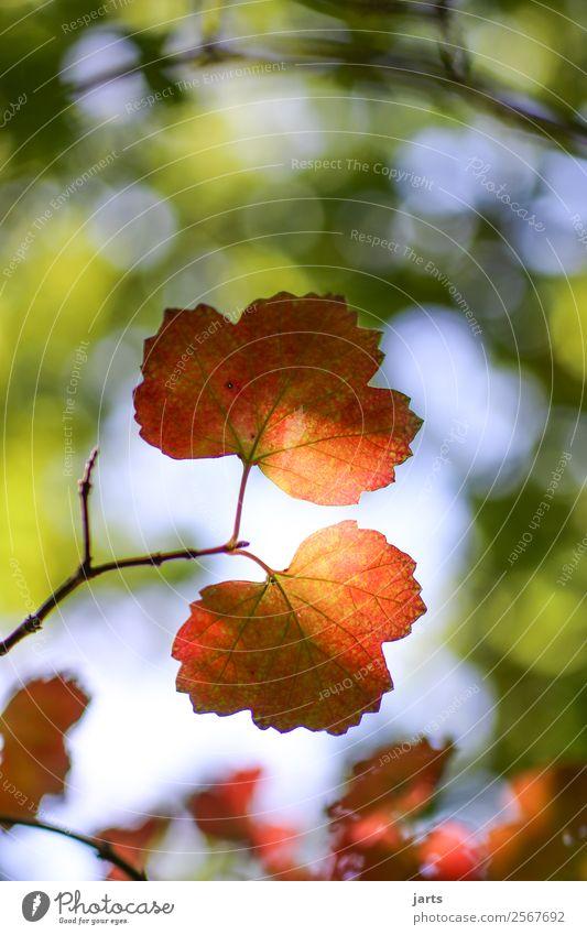 herbstlicht Natur Sonnenlicht Herbst Schönes Wetter Pflanze Baum Blatt Wald hell natürlich positiv gelb grün rot Gelassenheit ruhig Hoffnung Farbfoto mehrfarbig