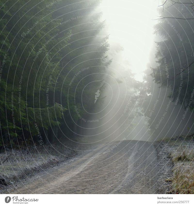 Sonnenkraft bezwingt die Nebelbank Sonnenlicht Herbst Eis Frost Schnee Wiese Wald Fußweg Wege & Pfade frieren leuchten hell kalt Wärme grau grün weiß Kraft