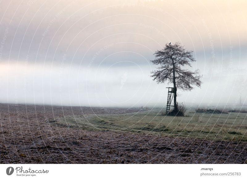 Nebelbank Landwirtschaft Forstwirtschaft Umwelt Natur Landschaft Klimawandel Baum Feld Hochsitz kalt Gefühle Stimmung Umweltschutz Farbfoto Außenaufnahme