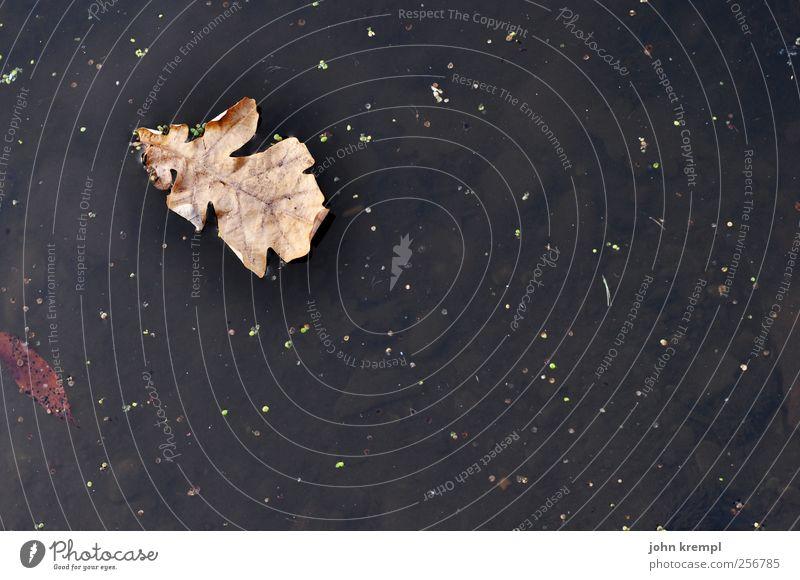 entblättert Herbst Blatt Teich alt fallen verblüht dehydrieren dunkel kaputt braun schwarz Traurigkeit Trauer Tod Einsamkeit Endzeitstimmung Natur stagnierend