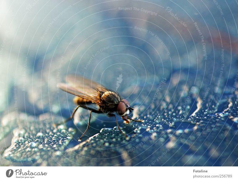 Bssssssssssssssssssss! Natur Wasser blau Winter Tier kalt Umwelt hell Eis Fliege Wildtier Coolness Flügel Frost Urelemente