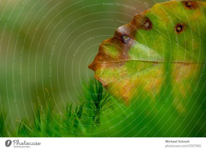 Herbstfarben Umwelt Natur Pflanze Blatt Wiese Wald einfach natürlich braun gelb grün Tod Vergangenheit Vergänglichkeit Farbfoto mehrfarbig Außenaufnahme