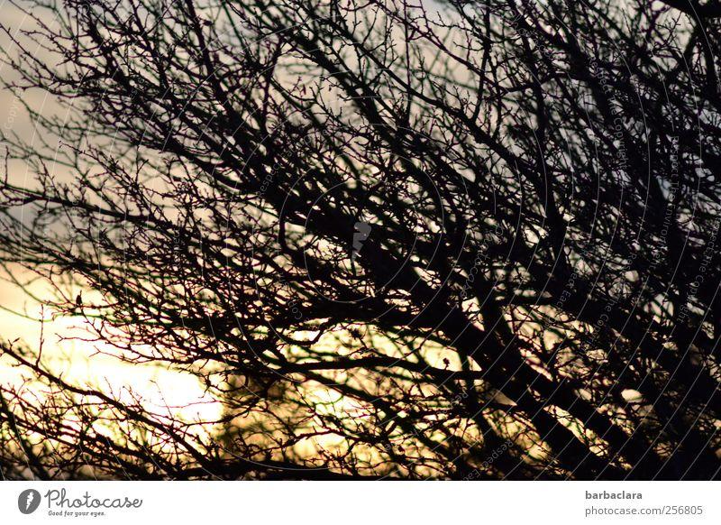 windgepeitscht Landschaft Sonnenaufgang Sonnenuntergang Klima Wind Sturm Baum Ast Bewegung leuchten Wachstum bedrohlich wild blau gold schwarz Stimmung Kraft