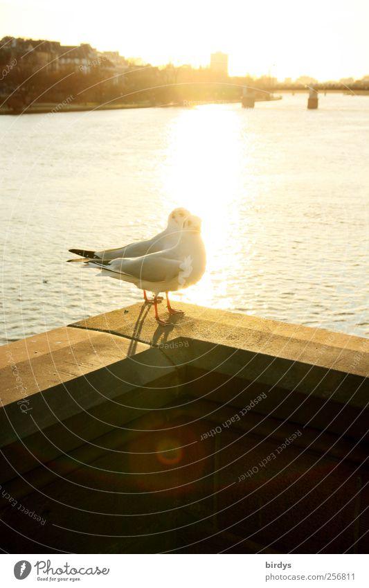 Glücksgefühle schön Tier Winter Wärme Herbst hell Vogel Tierpaar Zufriedenheit Schönes Wetter Brücke genießen Fluss Geländer Frieden