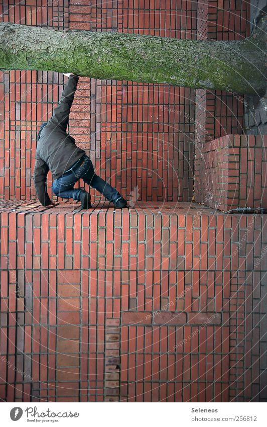 Naturschutz Häusliches Leben Klettern Mensch 1 Pflanze Baum Haus Mauer Wand Fassade Jeanshose Jacke Stein Backstein hocken festhalten abstützen schützend