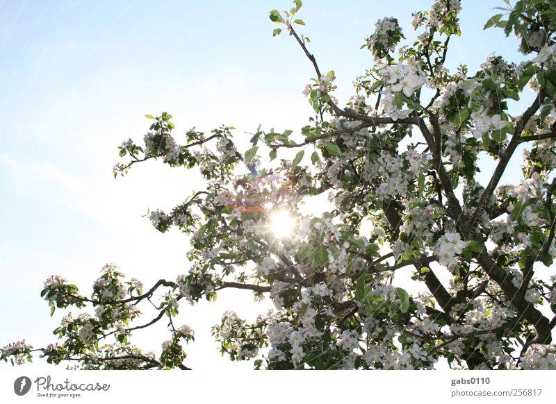 endlich frühling! Himmel Natur blau grün weiß schön Baum Pflanze Sonne Blatt Umwelt Garten Blüte Frühling braun frei