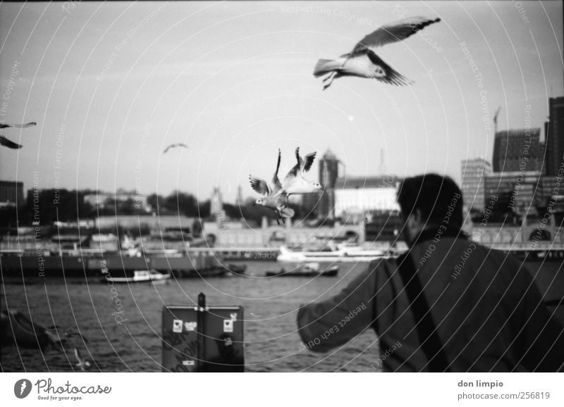 alex und die möwen maskulin 1 Mensch Herbst Schönes Wetter Fluss Elbe Hamburg Hafenstadt Stadtrand bevölkert Binnenschifffahrt Tier Vogel Möwe Schwarm füttern