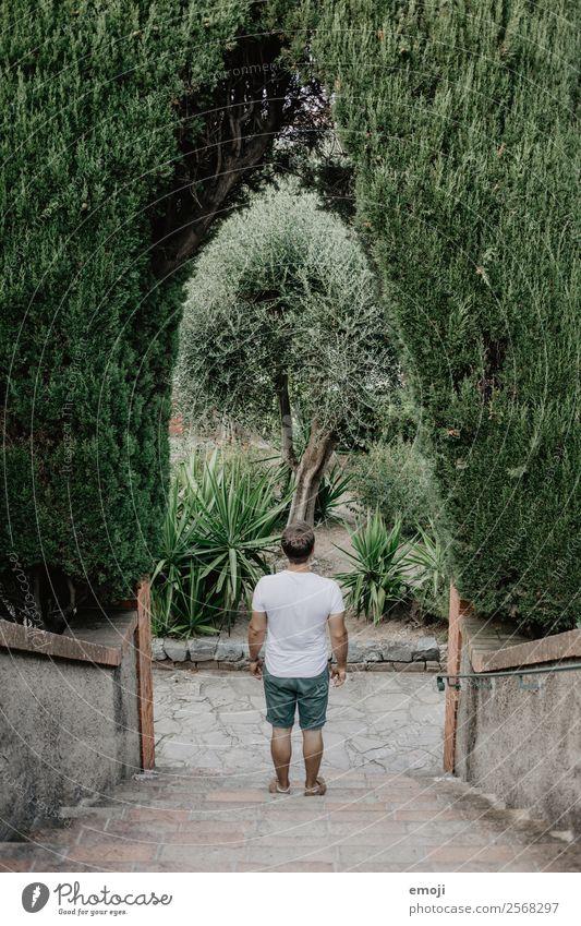 Cannes maskulin Junger Mann Jugendliche Erwachsene 1 Mensch 18-30 Jahre Pflanze Baum Park Treppe natürlich grün Farbfoto Außenaufnahme Tag