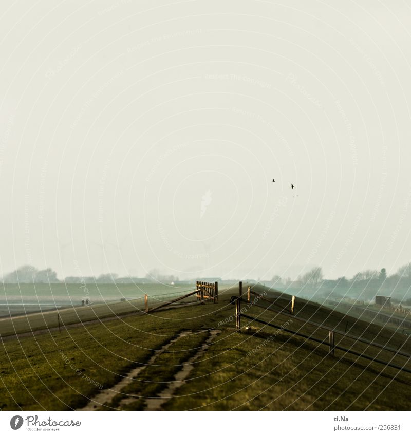 Schimmelreiter Mensch grün Meer Tier Einsamkeit Erholung grau Sand Vogel wandern Tourismus Nordsee Treppengeländer Wattenmeer Deich Schleswig-Holstein