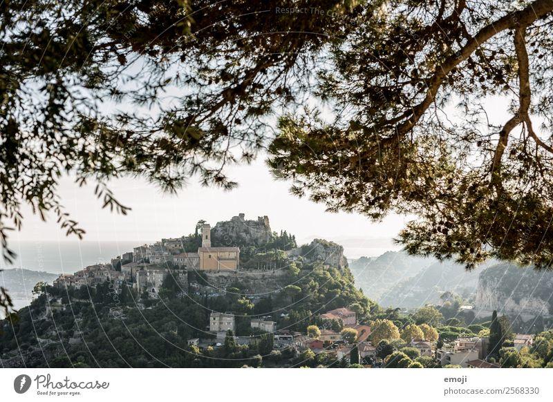 Èze Sommer Schönes Wetter Baum Hügel Dorf Haus natürlich grün Tourismus Cote d'Azur Frankreich Ferien & Urlaub & Reisen reiseziel Farbfoto Außenaufnahme Tag