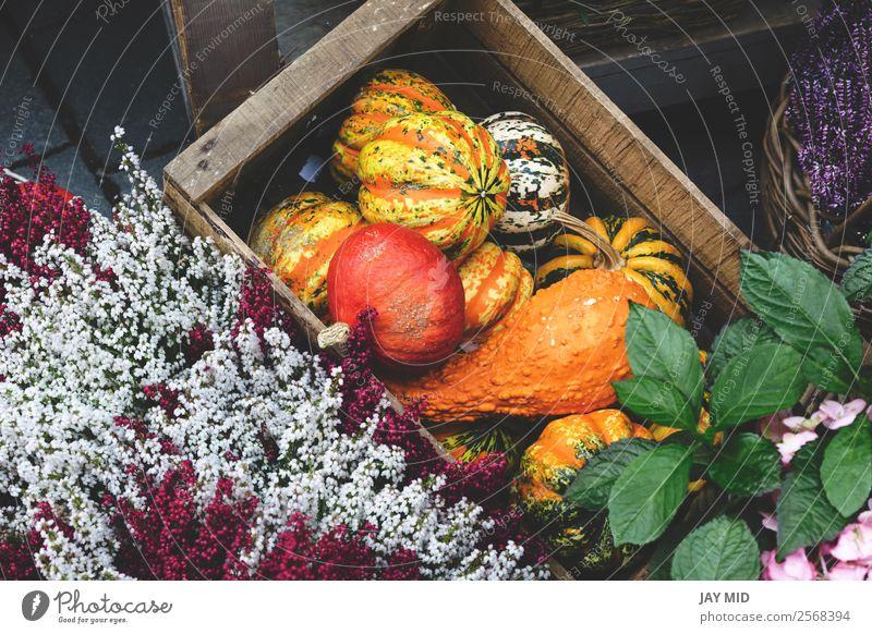 Arten von Kürbissen in einer Holzkiste mit Blumen Lebensmittel Gemüse Dekoration & Verzierung Erntedankfest Halloween Weihnachten & Advent Silvester u. Neujahr