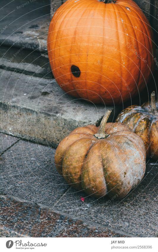 Kürbisse am Eingang des Hauses auf der Treppe Lebensmittel Frucht Halloween Weihnachten & Advent Silvester u. Neujahr fallen Schwerpunkt