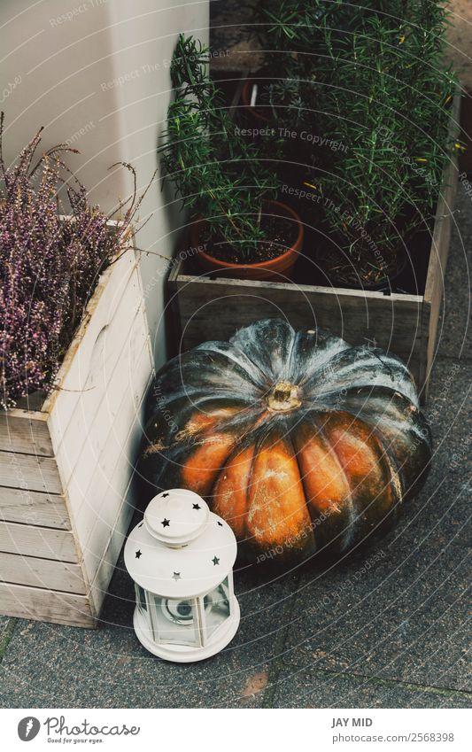 Herbstliche Dekoration mit Kürbissen auf der Straße Lebensmittel Gemüse Dekoration & Verzierung Erntedankfest Halloween Weihnachten & Advent