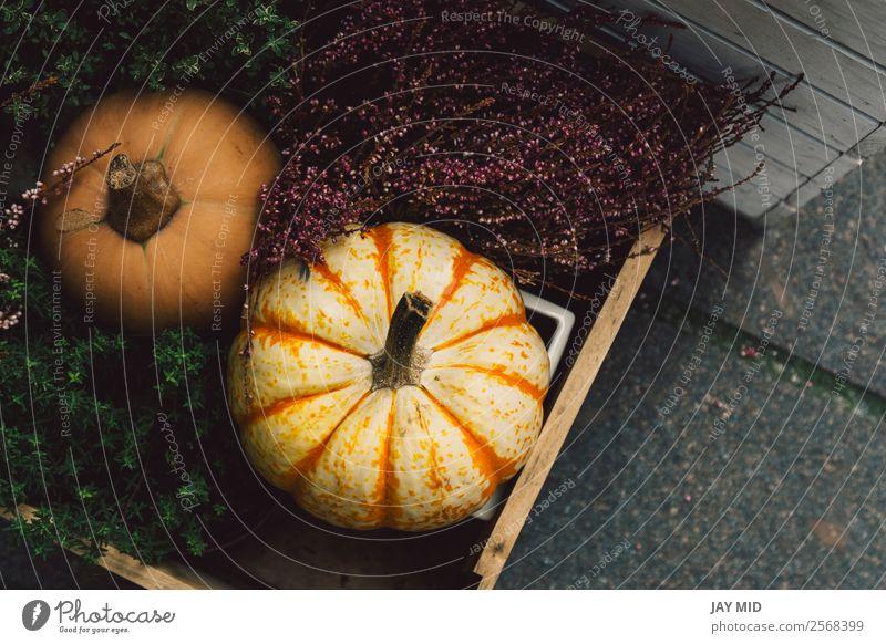 Verschiedene Arten von Kürbissen in einer Holzkiste Lebensmittel Gemüse Dekoration & Verzierung Erntedankfest Halloween Weihnachten & Advent