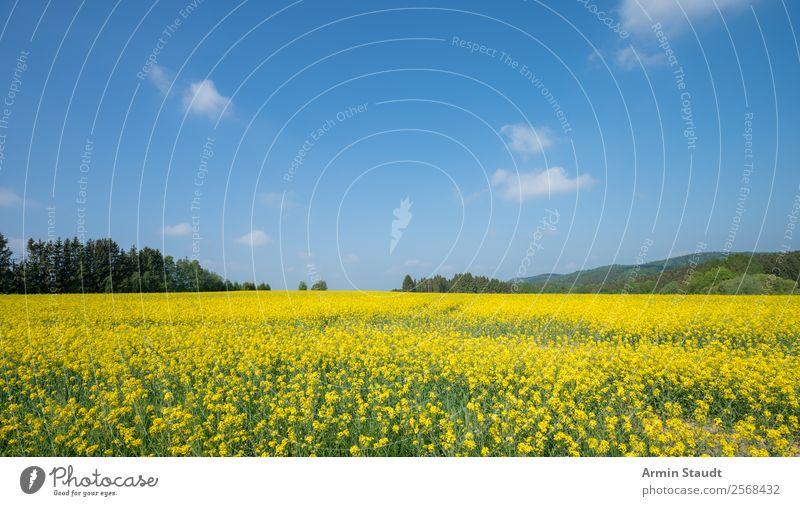 Landschaft mit Rapsfeld Ferien & Urlaub & Reisen Ausflug Ferne Freiheit Sommerurlaub Landwirtschaft Forstwirtschaft Umwelt Natur Pflanze Himmel Wolken Frühling