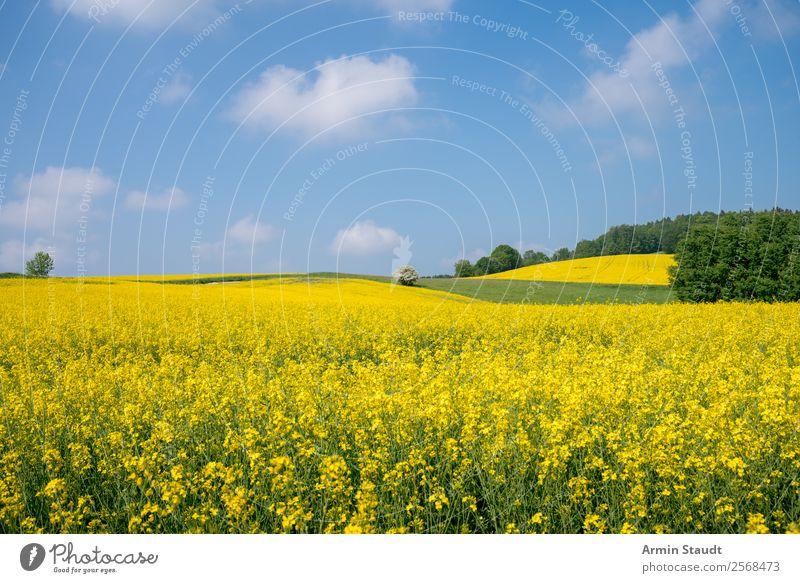 Landschaft mit Rapsfeld Ferien & Urlaub & Reisen Ausflug Ferne Freiheit Sommerurlaub Umwelt Natur Pflanze Himmel Wolken Frühling Schönes Wetter Wiese Feld Wald