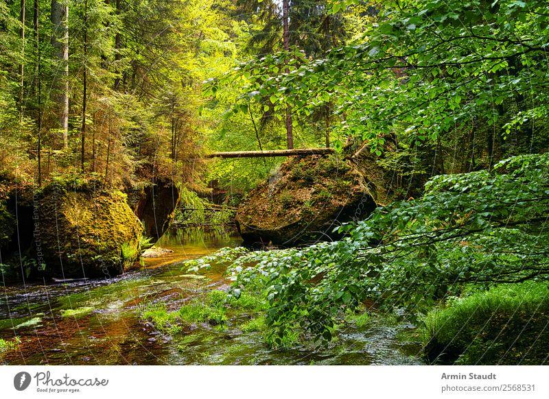 Sächsische Schweiz, Urwald Natur Sommer Wasser Landschaft Erholung Einsamkeit ruhig Wald Lifestyle Leben Umwelt Frühling Felsen Stimmung Zufriedenheit wild