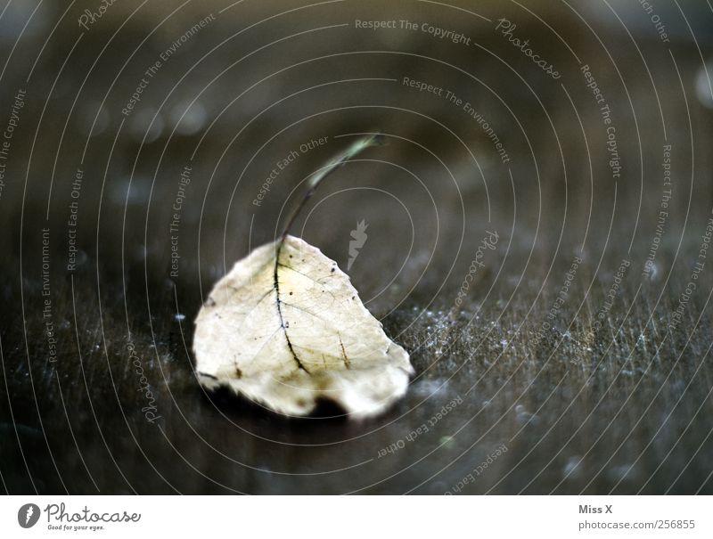 Blatt Herbst trocken braun Verfall Vergänglichkeit Herbstlaub Farbfoto Gedeckte Farben Nahaufnahme Strukturen & Formen Menschenleer Textfreiraum oben