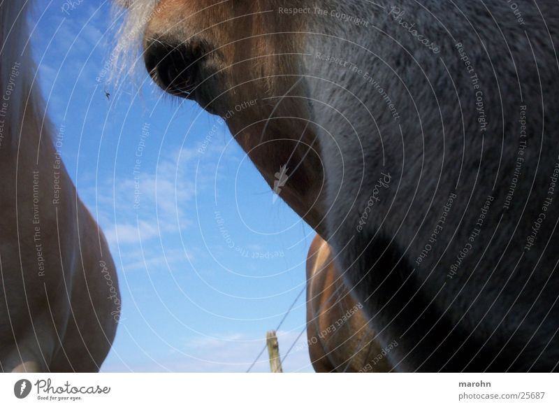a horse with no name Natur Himmel Pferd Neugier Geruch spontan Nasenhaar